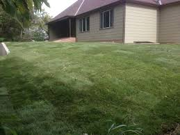 sod installation daniels lawn and landscaping services