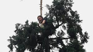 who spent 25 hours atop downtown seattle tree ordered to