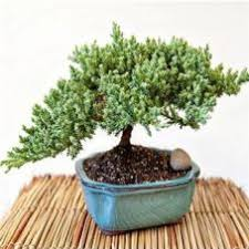 plant gifts for every holiday christmas plants givingplants com