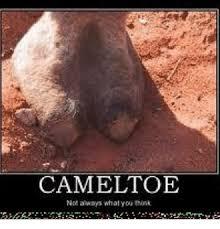 Toe Memes - camel toe not always what you think camel toe meme on esmemes com