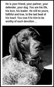Dog Burial Backyard Best 25 Pet Caskets Ideas On Pinterest Losing A Dog Easy