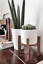 Yucca Wohnzimmer Wohnideen Und Trends Zimmerpflanzen Einrichtungsideen Wohnzimmer