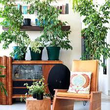 plants that grow in dark rooms indoor plant room indoor plant decoration ideas indoor plant dark