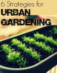 planning a vegetable garden in the city urban vegetable