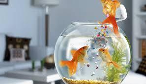 global ornamental fish feed consumption market report 2016 isha