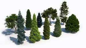 laubwerk plants kit 5 temperate coniferous trees purchase
