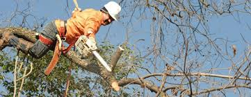 looking for tree removal here s what you should tree