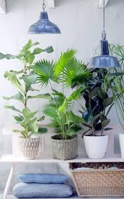 Home Decorating Plants Botanical Inspired Home Decor Designs