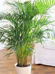 planting potted palms hgtv