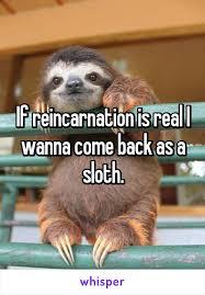 Sloth Whisper Meme - reincarnation is real i wanna come back as a sloth