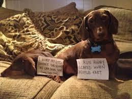 Benson Dog Meme - lol funny meme dog gallery 4 dog shame