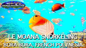 intercontinental le moana snorkeling bora bora youtube