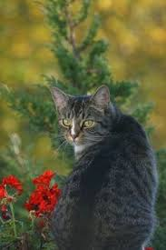 ways to keep those pesky cats out of your yard yards cat