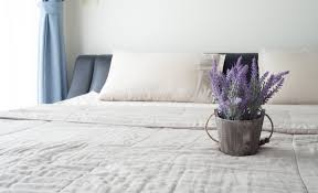 the best plants for your bedroom racq living