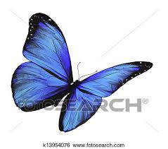 stock illustration of blue butterfly flying isolated on white