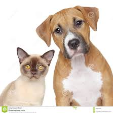 cat and dog sitting together stock photo image 40311113