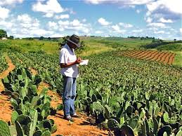 native brazilian plants a perfect anti desertification plant the spineless prickly pear