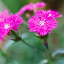 Fragrant Shade Plants - the best fragrant flowers for your garden