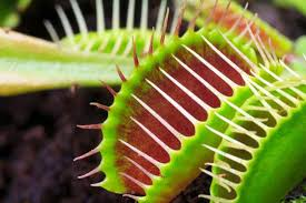 14 captivating facts about carnivorous plants mental floss