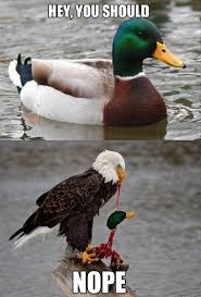 Anaheim Ducks Memes - post your favorite meme thread page 760 tmb