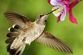 Hummingbird On A Flower - gardening small space and container gardening hummingbird garden