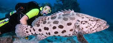 Louisiana snorkeling images Harry 39 s dive shop since 1971 new orleans 39 favorite dive center jpg
