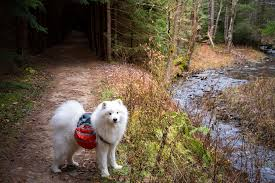 West Virginia how to travel with a dog images The world 39 s newest photos of puppy and samoyed flickr hive mind jpg