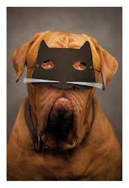 halloween dog mask dog in a cat mask halloween card greeting cards hallmark