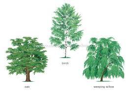 plants gardening plants tree examples of broadleaved