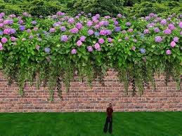 wall flowers second marketplace garden privacy screen of wall with