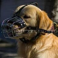 Comfort Golden Golden Retriever Dog Muzzles