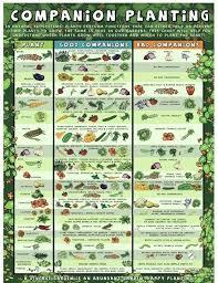 Garden Layout Planner Vegetable Garden Layout Planner Vegetable Garden Layout Guide