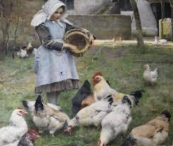 the california slipshod method poultry farming in 19th century