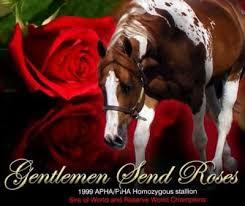 send roses gentlemen send roses 1999 sorrel tobiano apha stallion