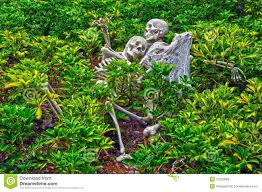 halloween skeletons decoration royalty free stock images image