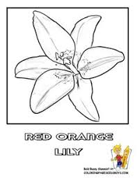 Easter Flower Coloring Pages - flower page printable coloring sheets print this page spring
