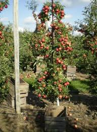 Best Fruit Tree For Backyard Best 25 Small Space Gardening Ideas On Pinterest What Is
