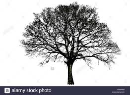 tree silhouette single black and white line isolated remote alone