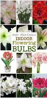 Indoor Fragrant Plants - best 25 indoor flowers ideas on pinterest apartment plants
