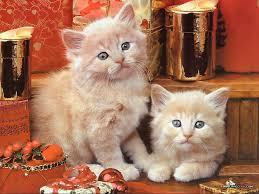 back gallery for thanksgiving kitten wallpaper cat pictures