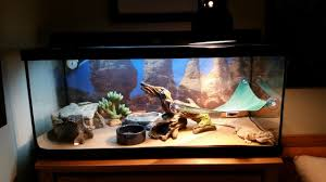 Zoo Med Lighting by Too Small Of Tank U2022 Bearded Dragon Org