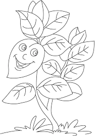 basil plant coloring download free basil plant coloring