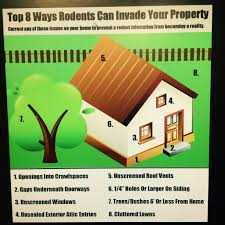tips to rodent proof your home pest control tips pinterest