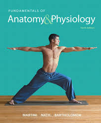 Anatomy And Physiology 7th Edition Saladin Anatomy And Physiology Book