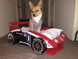 woman gets race car beds for her grandkids and granddog petcha