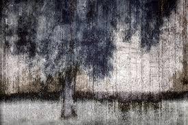 tree through sheer curtains photograph by carol leigh