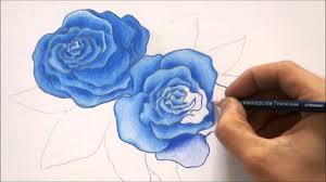 how to draw blue rose roses color pencil drawing youtube