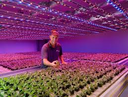 philips led grow light led grow lights sputters target in general grow lights are