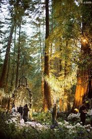 redwood forest wedding venue opulent redwood forest wedding channels tolkien and