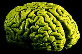 long term marijuana use changes brain at the cellular level say